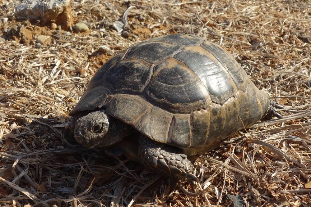 Pink Farm Cemetery Turtle